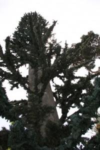 Plastikbäume